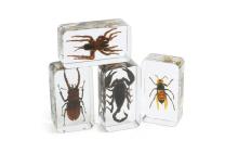 Acrylic Scary Bug Specimens - Set of 4