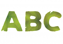 Aotearoa Leaf Alphabet Lettering - 12.7cm