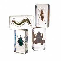 Acrylic Garden Friends - Set of 4
