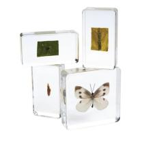 Acrylic Life Cycle Specimens - Set of 4