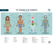 Te Tinana o te Tangata (The Human Body) Chart